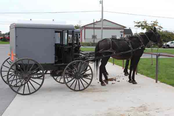 horse & buggies of the Amish People